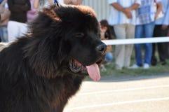 Perro de la demostración del verano Imagen de archivo
