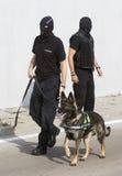 Perro de la detección de drogas de las aduanas Imágenes de archivo libres de regalías