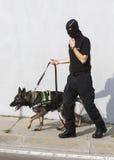 Perro de la detección de drogas de las aduanas Fotografía de archivo libre de regalías