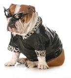 Perro de la diva Fotografía de archivo libre de regalías