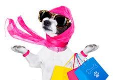 Perro de la diva de las compras Imágenes de archivo libres de regalías