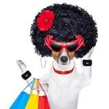 Perro de la diva de Shopaholic Imágenes de archivo libres de regalías
