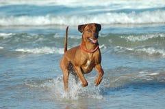 Perro de la diversión Imagen de archivo libre de regalías
