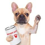 Perro de la donación Imagenes de archivo
