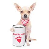 Perro de la donación Imágenes de archivo libres de regalías
