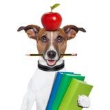 Perro de la escuela Fotografía de archivo