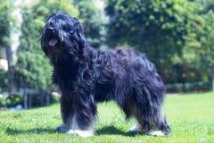 Perro de la exposición Foto de archivo libre de regalías