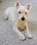 Perro de la familia Foto de archivo libre de regalías