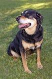 Perro de la familia en el parque del perro Fotos de archivo