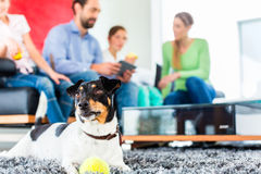Perro de la familia que juega con la bola en sala de estar fotos de archivo