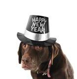 Perro de la Feliz Año Nuevo Foto de archivo libre de regalías