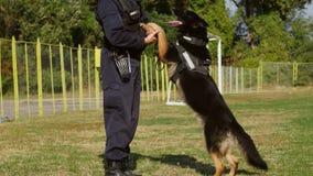 Perro de la gendarmería que juega con el instructor Fotografía de archivo libre de regalías