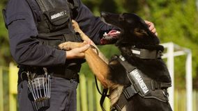 Perro de la gendarmería que juega con el instructor Imagenes de archivo