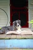 Perro de la granja en Front Porch Imagen de archivo libre de regalías