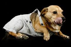 Perro de la lengua Foto de archivo