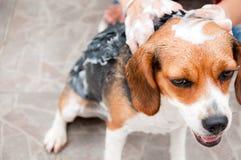 Perro de la limpieza Fotos de archivo