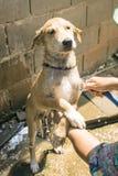 Perro de la limpieza Foto de archivo