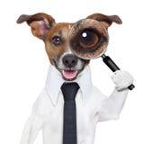 Perro de la lupa imagen de archivo libre de regalías