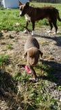 Perro de la mama y sus perritos Fotos de archivo libres de regalías