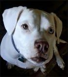 Perro de la maravilla fotografía de archivo