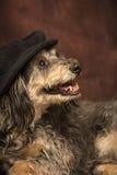 Perro de la MOD Imagenes de archivo