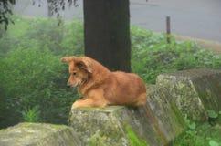 Perro de la montaña fotos de archivo libres de regalías