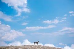 Perro de la montaña del border collie con el fondo del cielo azul fotografía de archivo