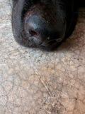 Perro de la nariz Imagenes de archivo
