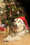 Perro de la Navidad Imagen de archivo