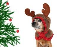 Perro de la Navidad Fotografía de archivo