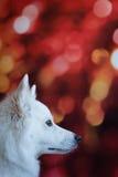Perro de la Navidad foto de archivo