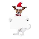 Perro de la Navidad como Papá Noel Foto de archivo libre de regalías