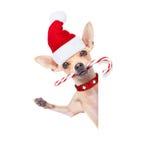 Perro de la Navidad como Papá Noel Imágenes de archivo libres de regalías