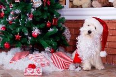 Perro de la Navidad como símbolo del Año Nuevo Foto de archivo libre de regalías