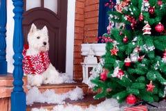 Perro de la Navidad como símbolo del Año Nuevo Imagen de archivo