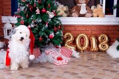 Perro de la Navidad como símbolo del Año Nuevo Fotos de archivo