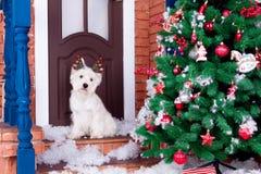 Perro de la Navidad como símbolo del Año Nuevo Fotografía de archivo