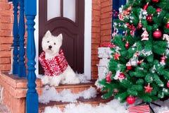 Perro de la Navidad como símbolo del Año Nuevo Imagen de archivo libre de regalías