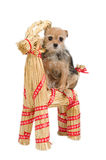 Perro de la Navidad del montar a caballo en el reno de Santa Foto de archivo