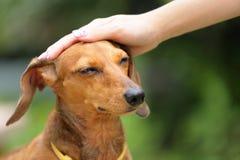 Perro de la obediencia Fotografía de archivo