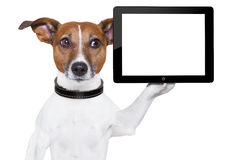 Perro de la PC de la tablilla Foto de archivo libre de regalías