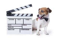 Perro de la película fotos de archivo libres de regalías