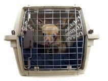 Perro de la perrera Imagenes de archivo