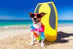 Perro de la persona que practica surf Imagenes de archivo