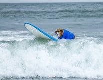 Perro de la persona que practica surf del tablero de resaca fotografía de archivo libre de regalías