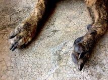 Perro de la pierna Imágenes de archivo libres de regalías