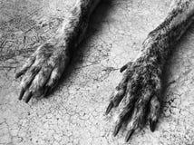 Perro de la pierna Imagen de archivo libre de regalías