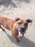 Perro de la playa imagenes de archivo
