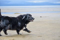 Perro de la playa imagen de archivo libre de regalías