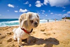 Perro de la playa Imágenes de archivo libres de regalías